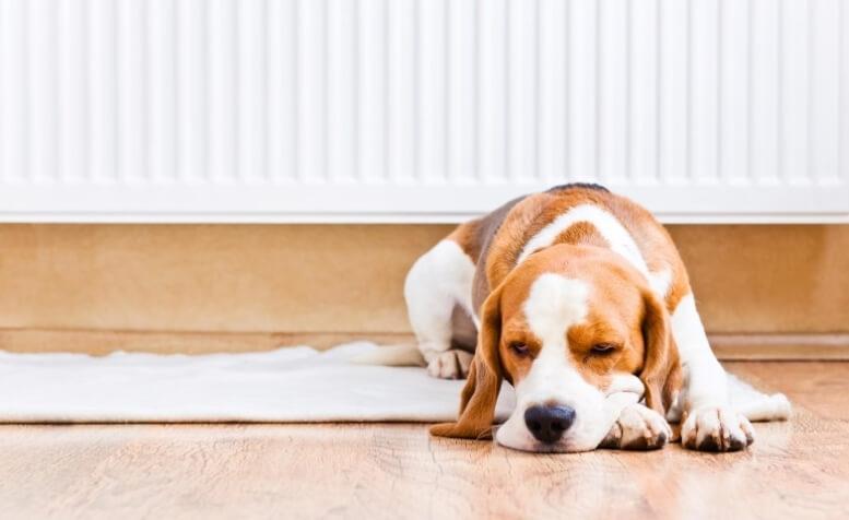Hond voor een radiator
